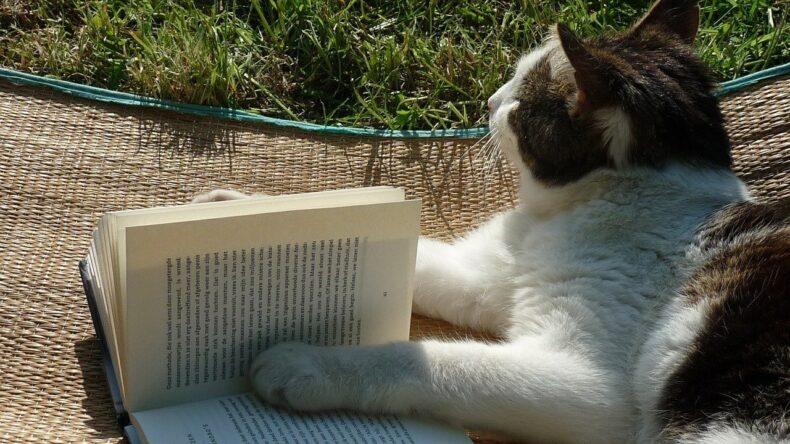 Begrijpend lezen is een ramp